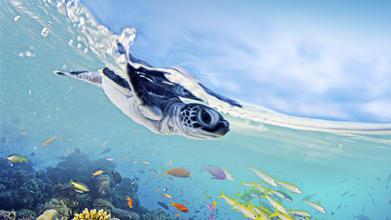 Das Great Barrier Reef (AB 23. FEB)