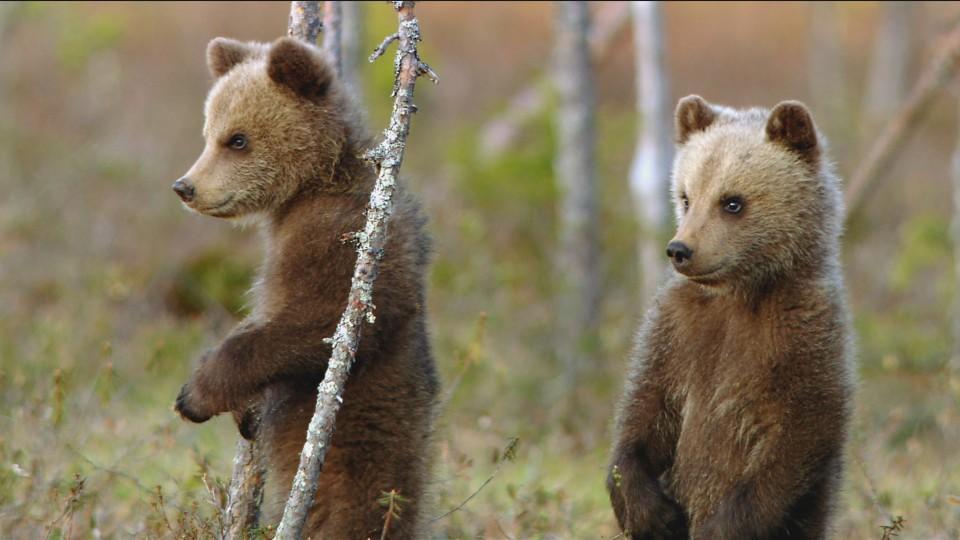 DEUTSCHLANDPREMIERE: Alles über Bären
